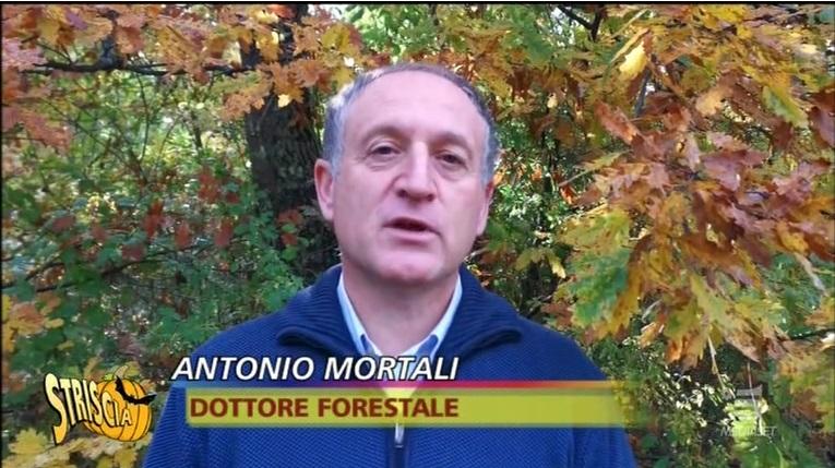 KilometroVerdeParma - Striscia La Notizia - Antonio Mortali