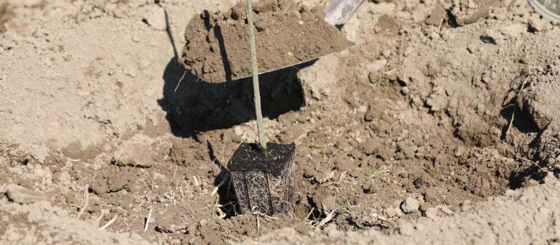 La messa a dimora di una pianta da parte di Mutti nell'area di via Traversetolo, a Montechiarugolo (Parma)